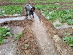 02_irrigazione.jpg