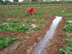 04_irrigazione.jpg